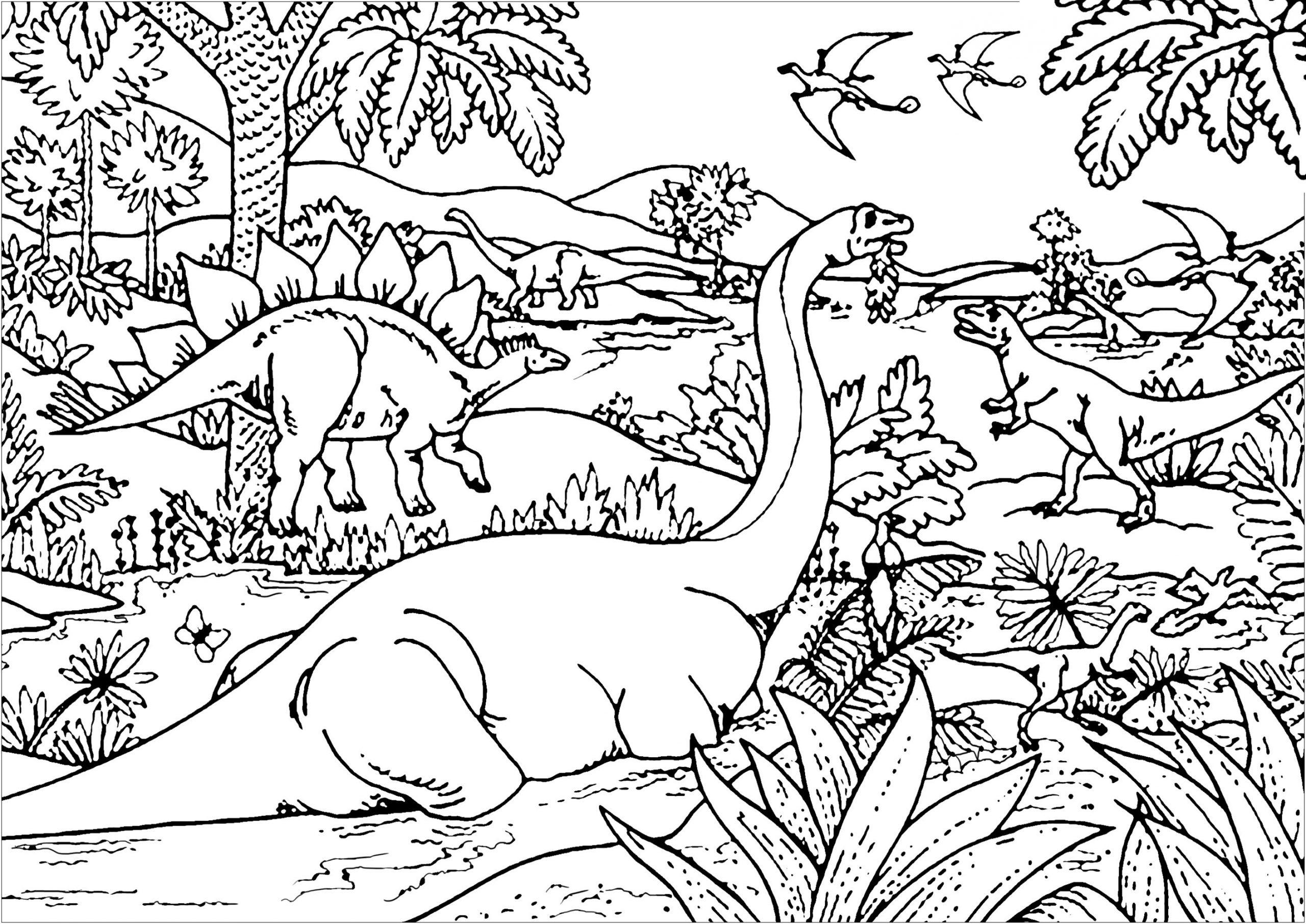 Dinosaurier 10703 - Dinosaurier - Malbuch Fur Erwachsene bei Mandala Dino