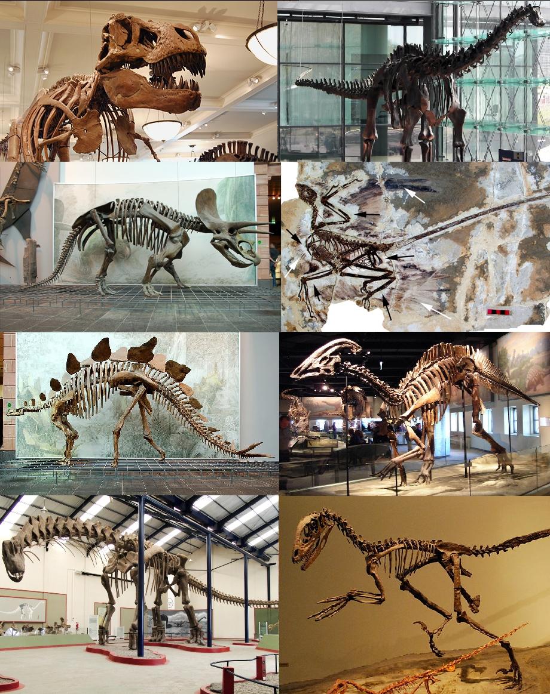 Dinosaurier – Wikipedia über Dinosaurier Namen Und Bilder