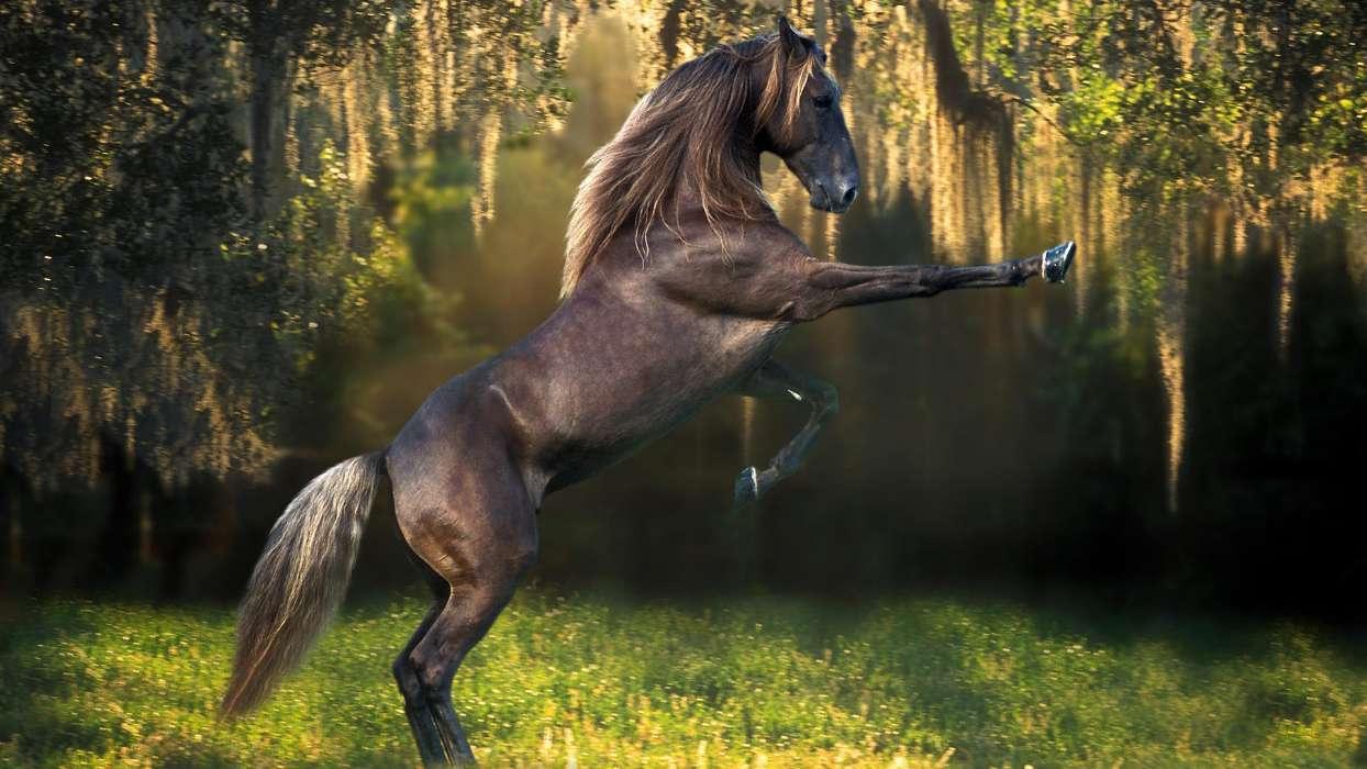 Download Bilder Für Das Handy: Tiere, Pferde, Kostenlos. 27032 für Pferde Bilder Kostenlos Herunterladen