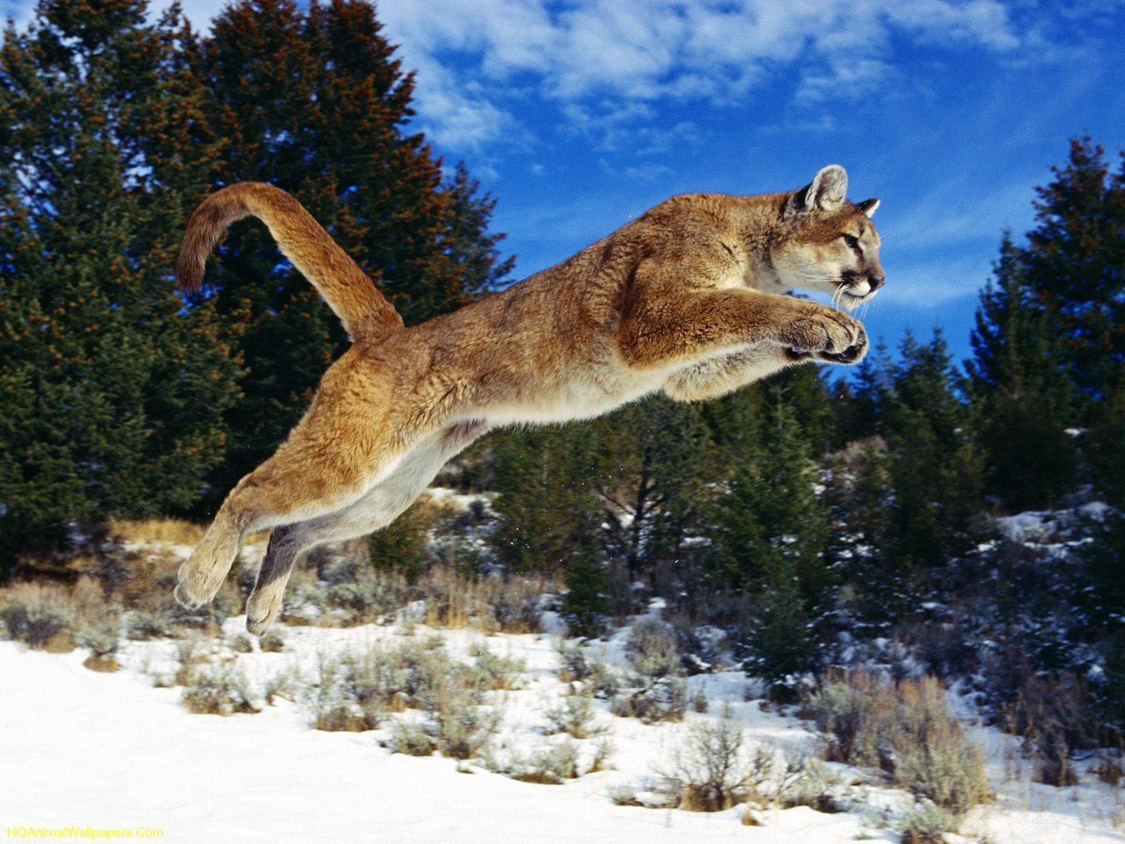 Download Free Desktop Background Wallpapers For Your Mobile über Tierbilder Download