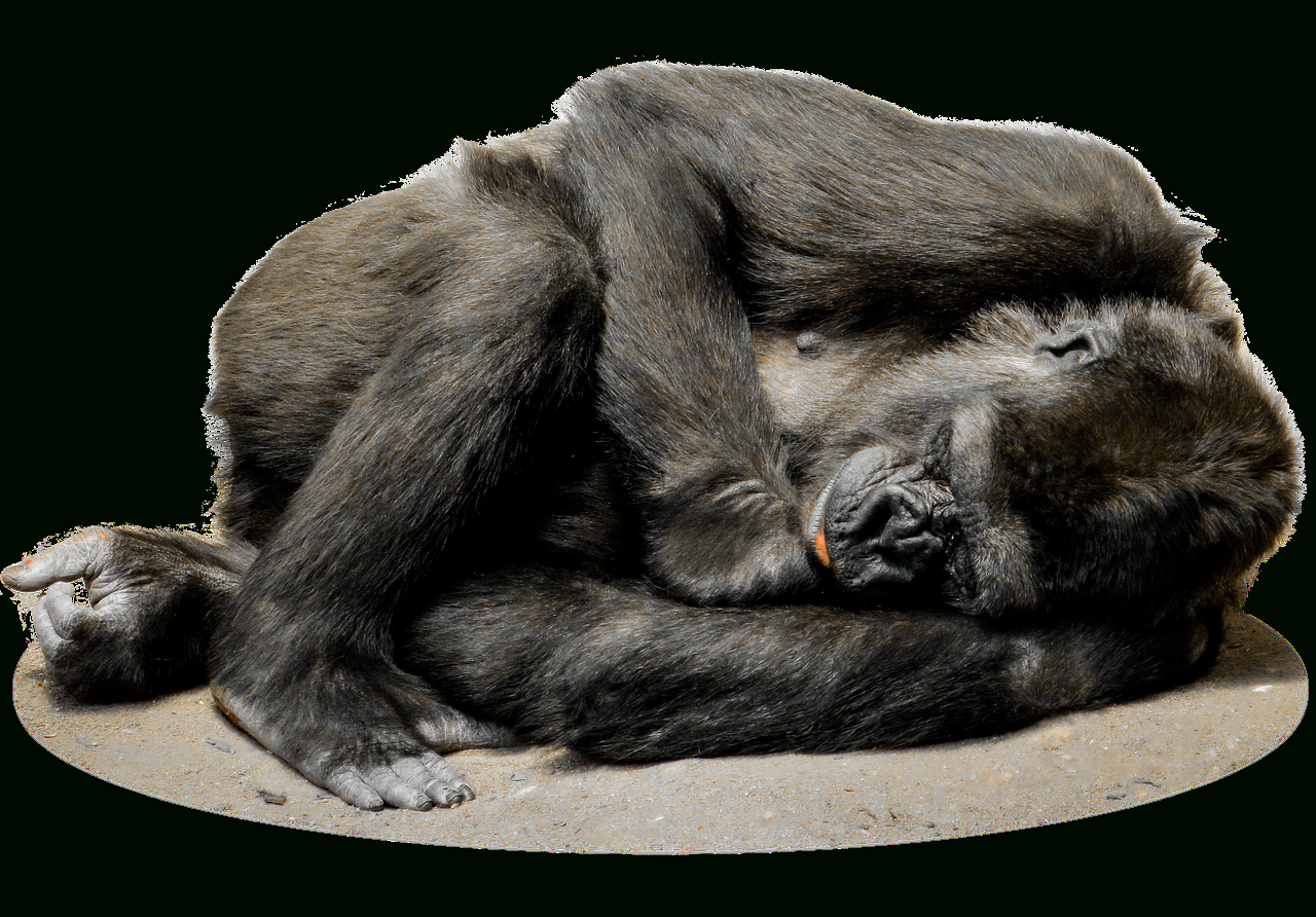 Dreamies.de | Affen, Säugetiere, Tiere innen Affe De Kostenlos