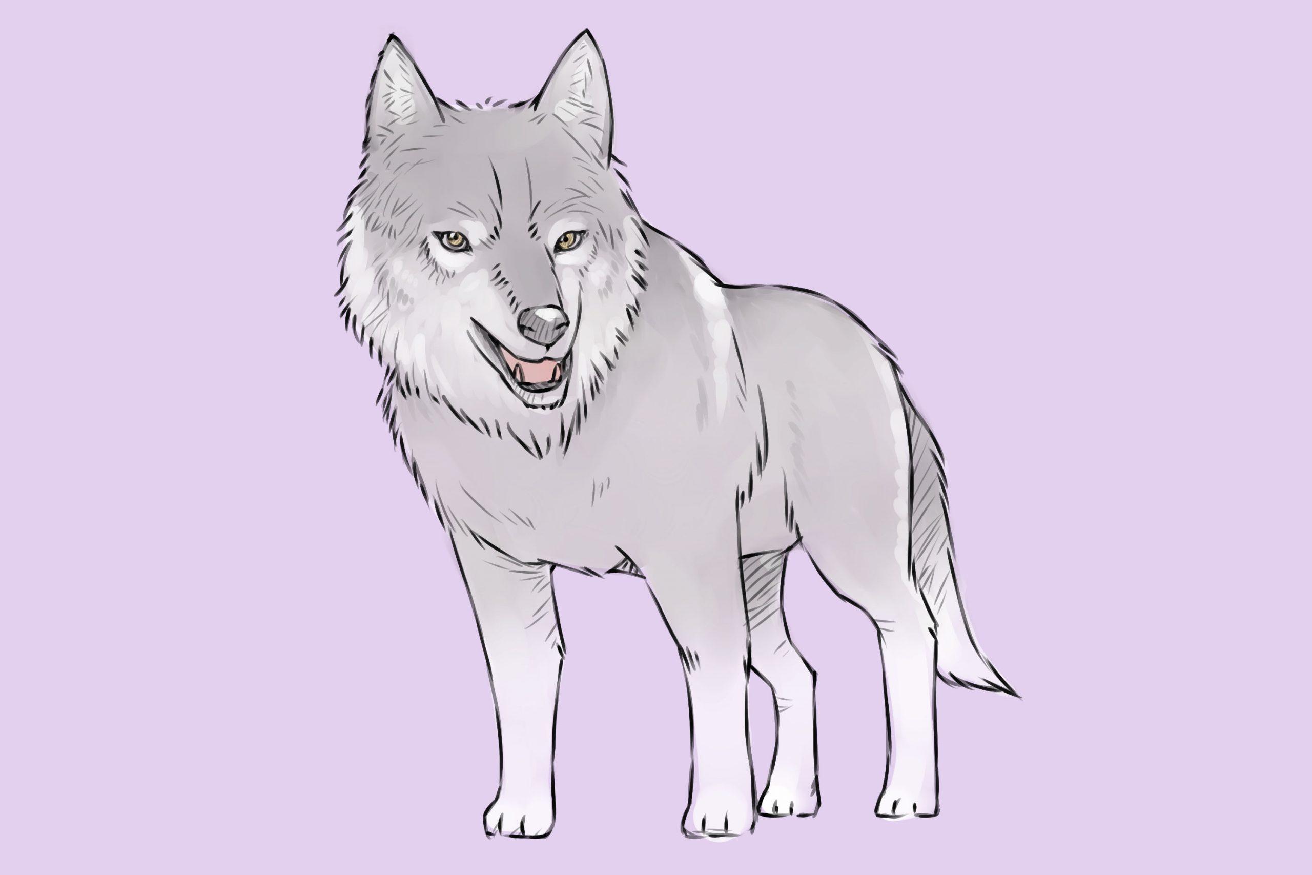 Einen Wolf Zeichnen (Mit Bildern) – Wikihow ganzes Wölfe Zeichnen