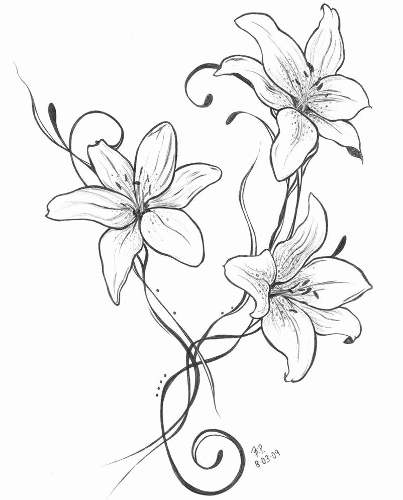 Einfache Bleistiftzeichnungen Blumen Genial Lilies Other bestimmt für Bleistiftzeichnungen Blumen