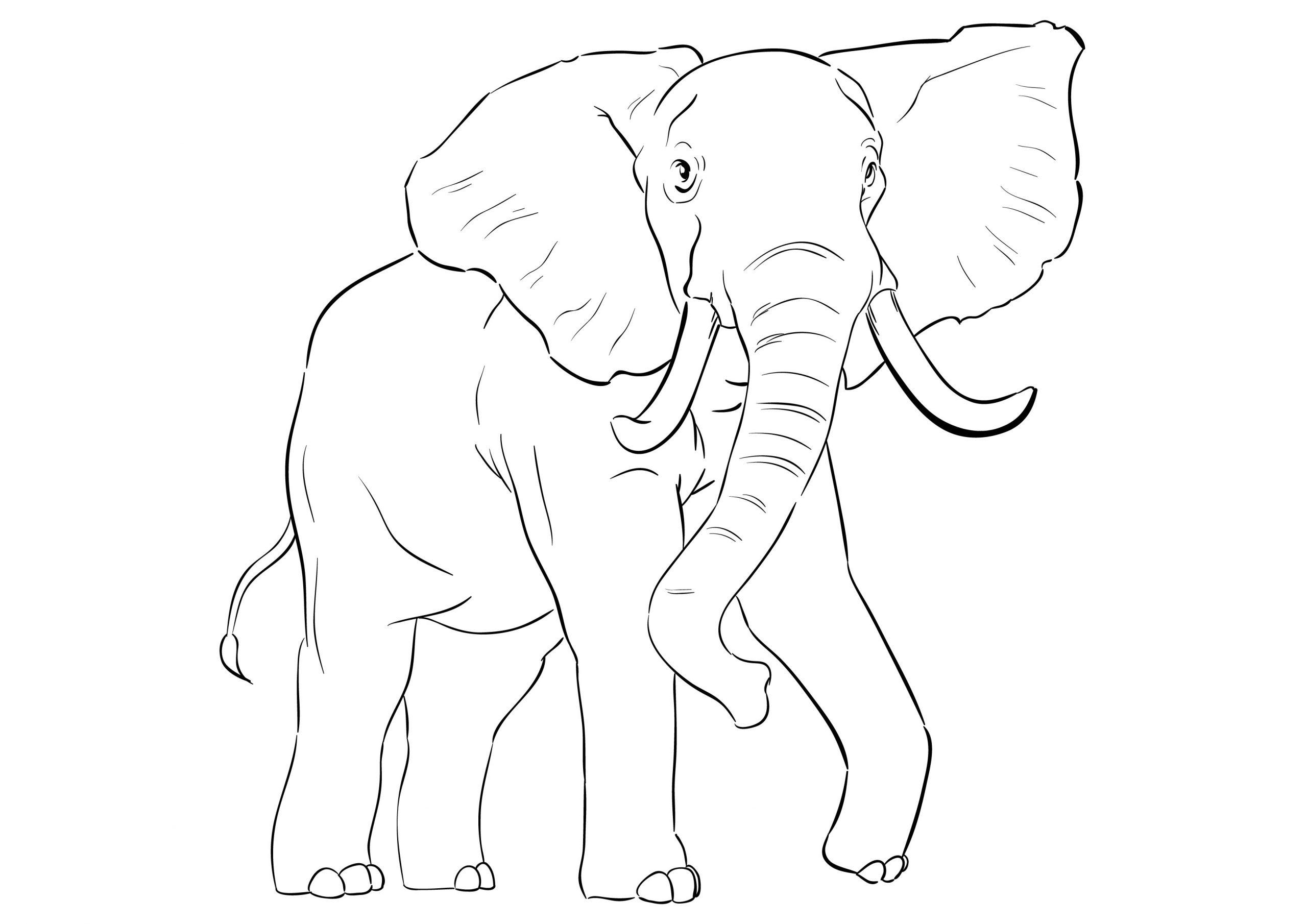 Elefant Malvorlage | Coloring And Malvorlagan in Malvorlage Elefant