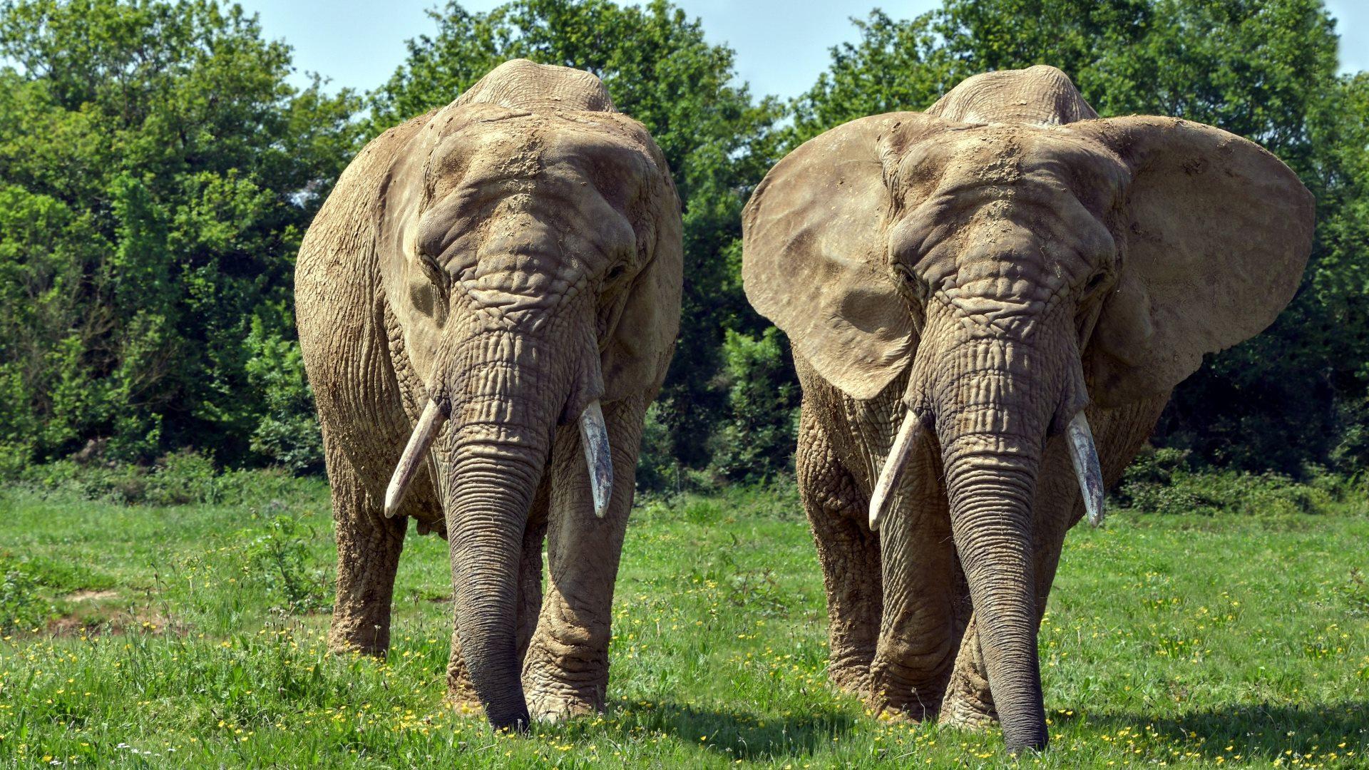 elefanten bilder kostenlos - kinderbilder.download