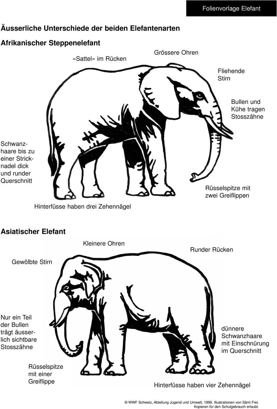 Elefanten. Vortragsdossier Des Wwf Schweiz - Pdf bestimmt für Unterschied Afrikanischer Und Indischer Elefant
