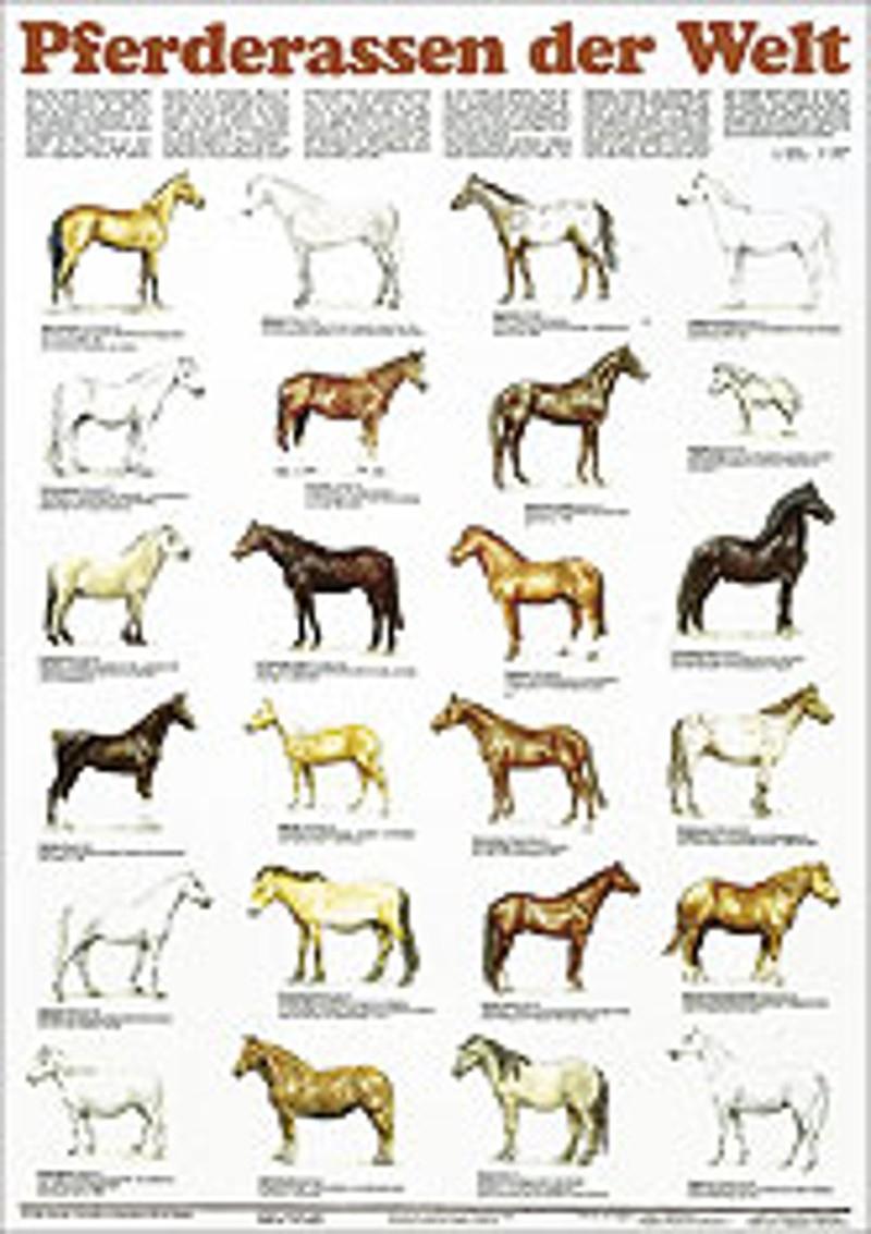 Ernst Klett Verlag - Pferderassen Der Welt Produktdetails ganzes Pferderassen Von A Bis Z Mit Bildern