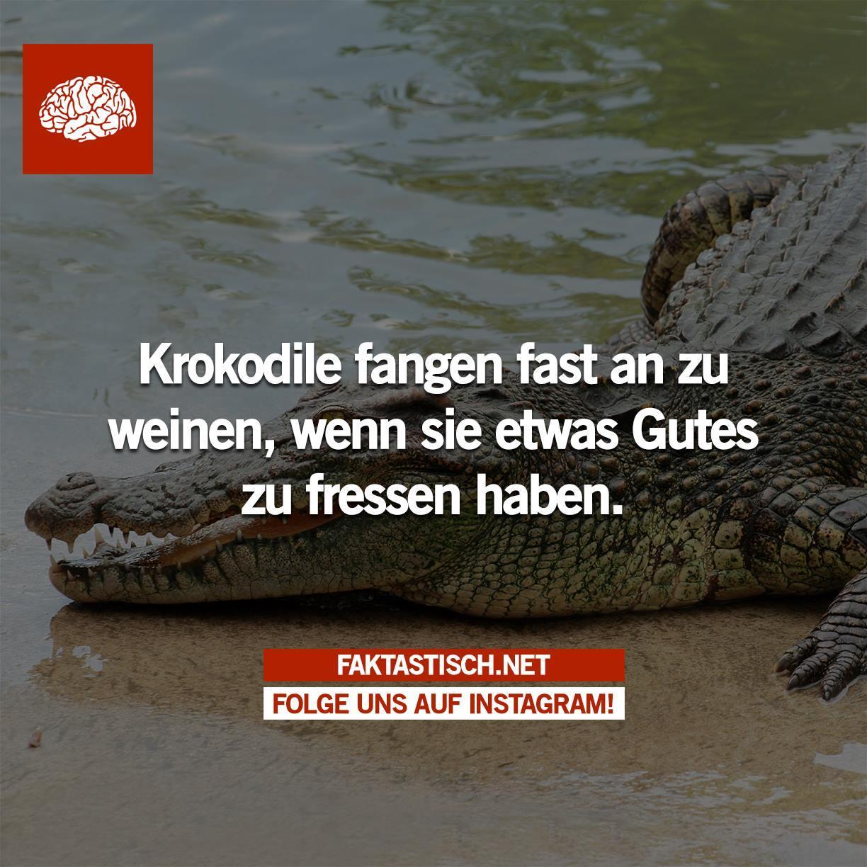 Faktastisch verwandt mit Warum Weinen Krokodile Beim Fressen