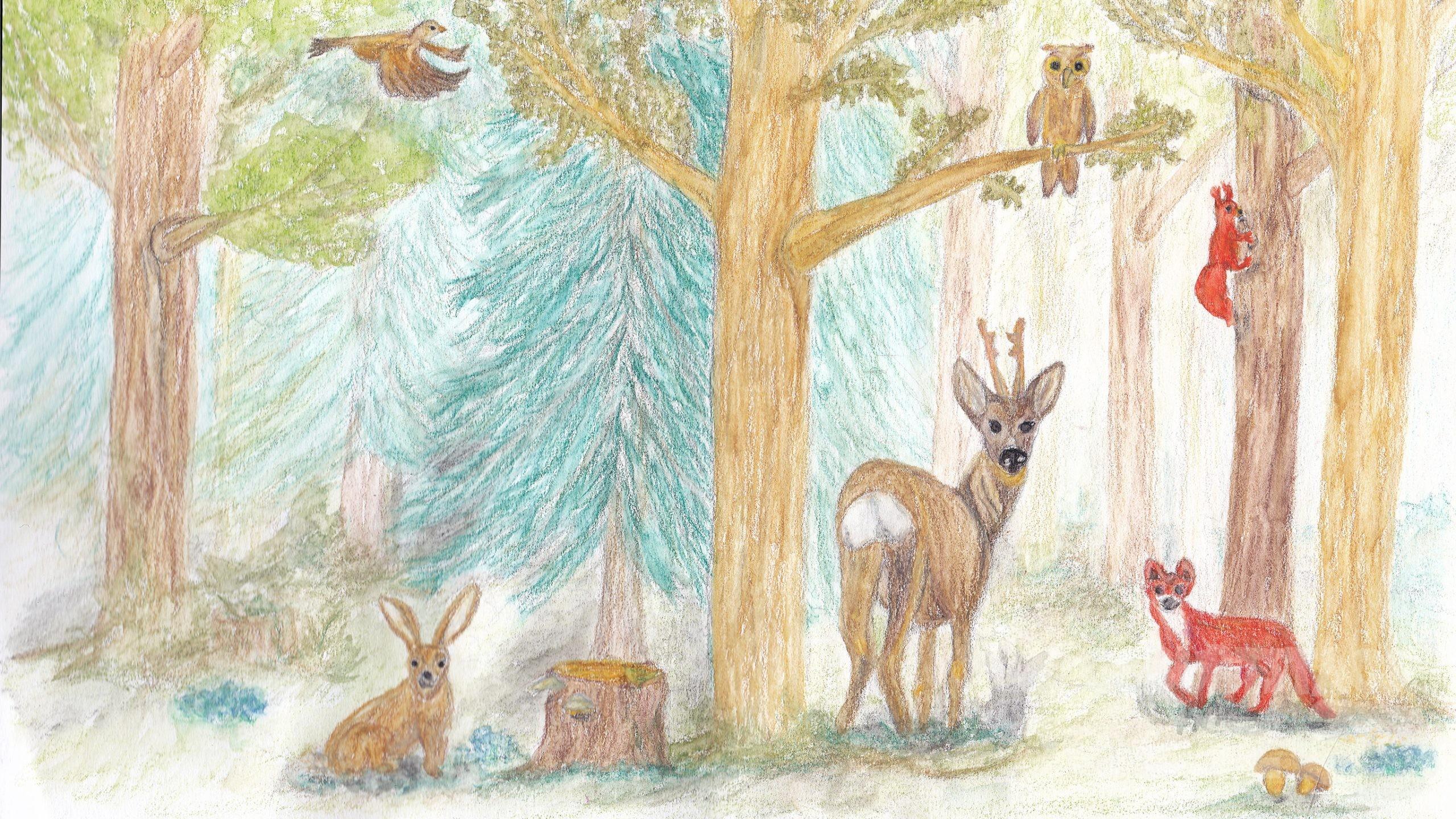 Fehlersuche Im Wald - in Fehlersuche Bilder