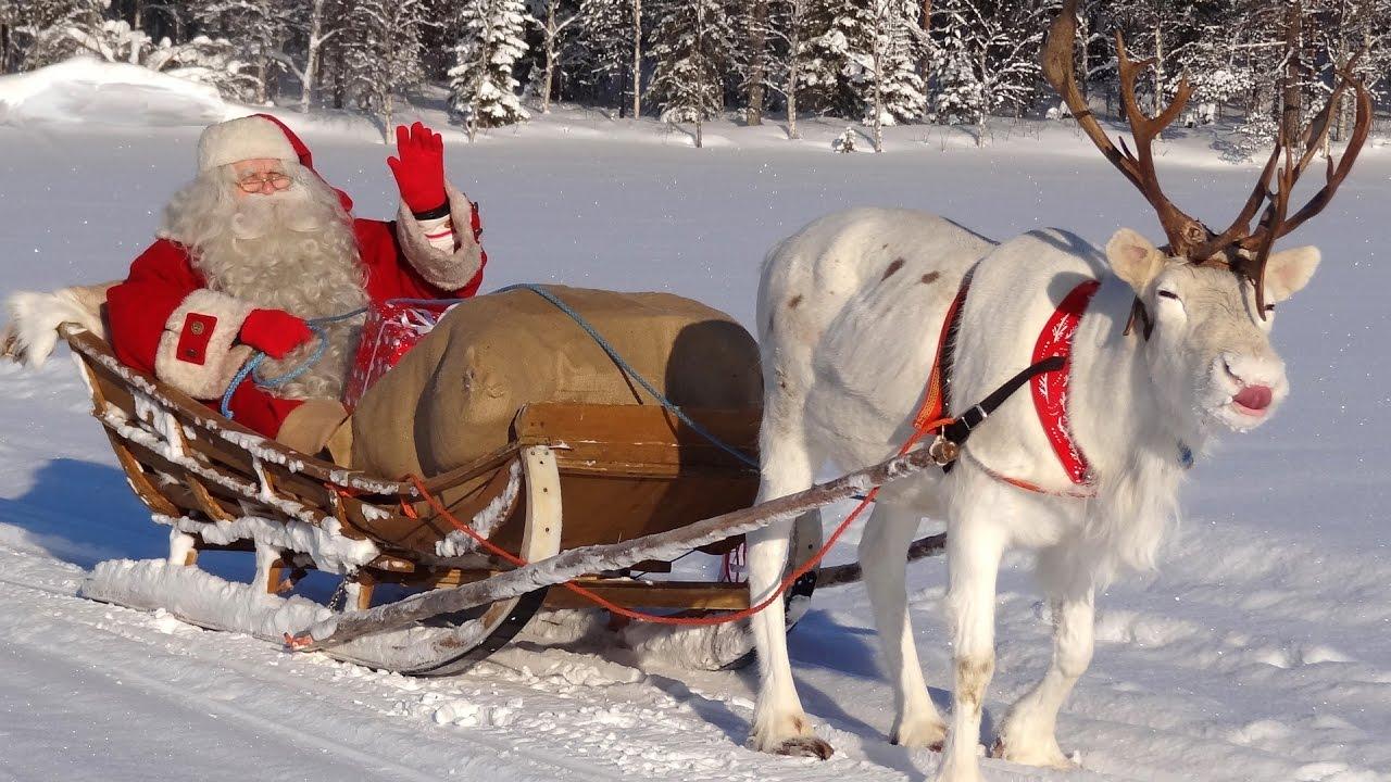Fliegende Rentiere Vom Weihnachtsmann: Geheimnisse Der Super-Flechten In  Lappland Video Für Kinder ganzes Nikolaus Rentiere