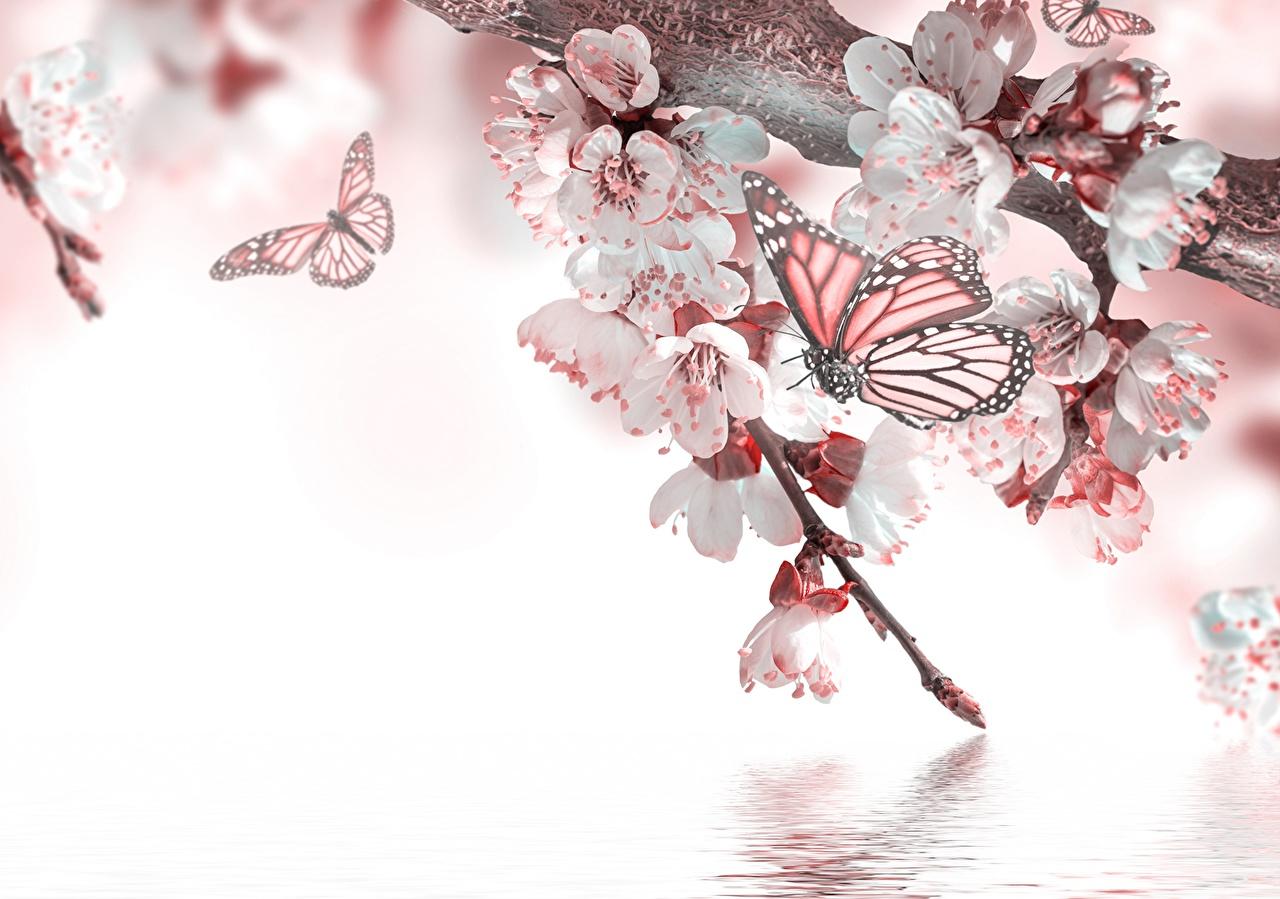 Foto Insekten Schmetterlinge Flügel Blumen Tiere Großansicht mit Hintergrundbilder Blumen Und Schmetterlinge