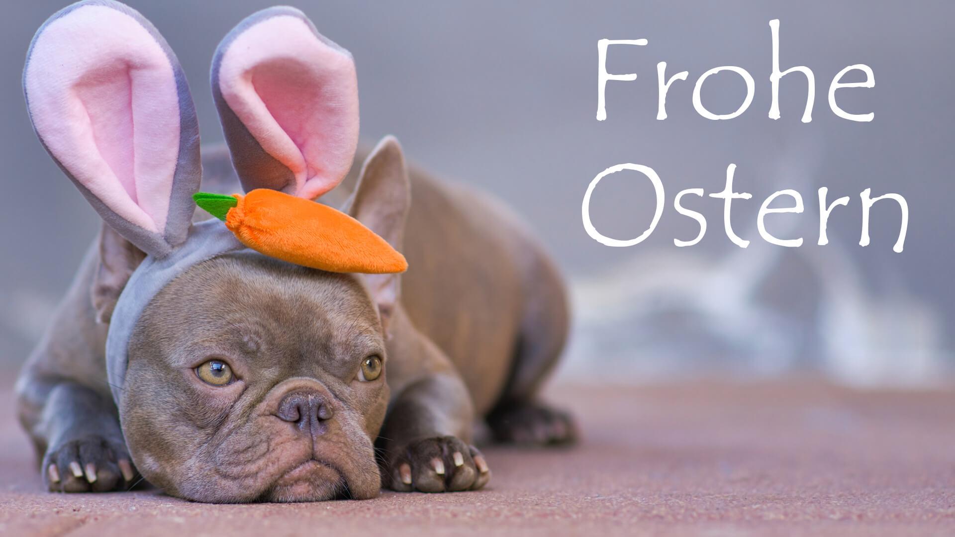 """Frohe Ostern!"""" Whatsapp-Grüße: Bilder An Familie Und Freunde über Ostern Lustig Bilder"""