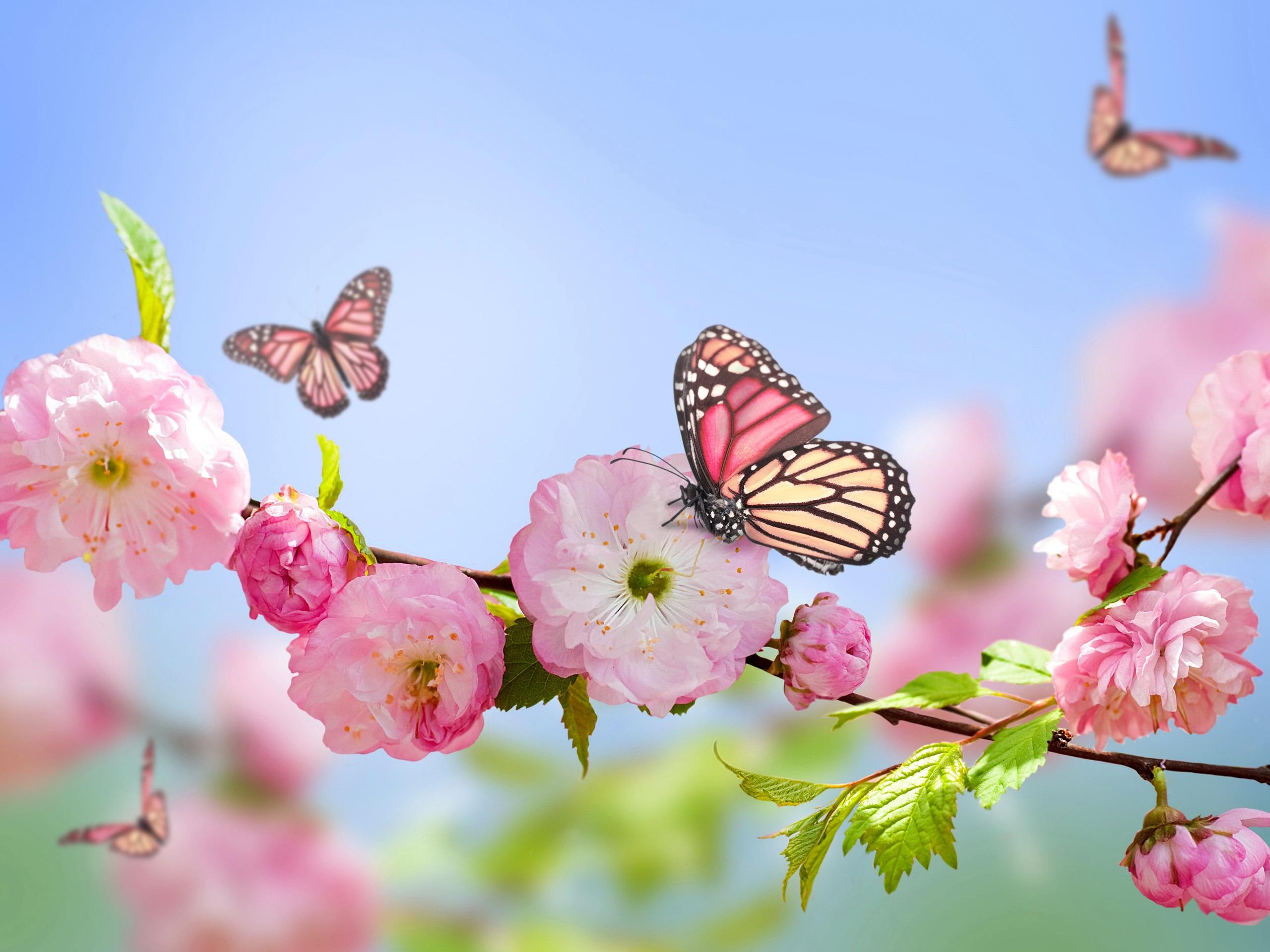 Frühling, Rosa Blumen, Schmetterlinge, Blauer Himmel mit Hintergrundbilder Blumen Und Schmetterlinge