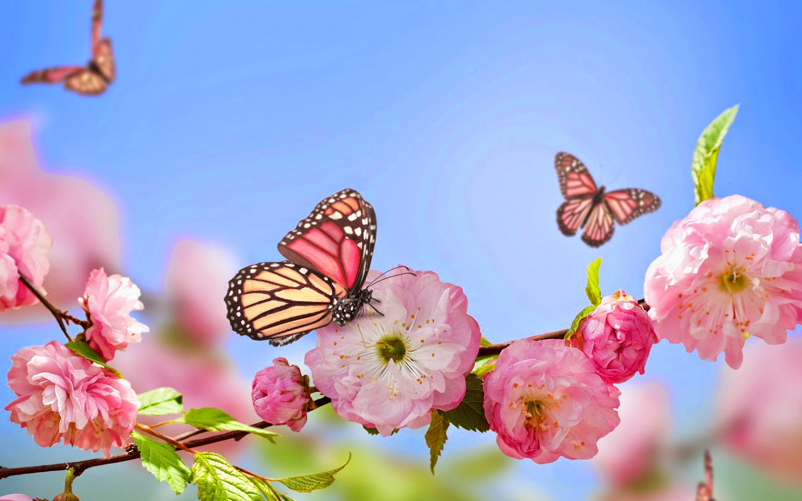 Fruhling Schmetterlinge Und Blumen | Hd Hintergrundbilder über Hintergrundbilder Blumen Und Schmetterlinge