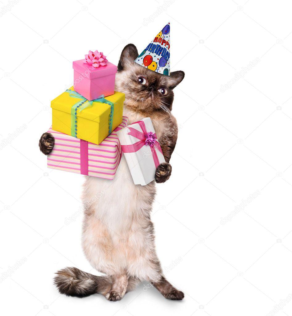 Geburtstag Katze Stock Photos, Lizenzfreie Geburtstag Katze verwandt mit Katzenbilder Comic