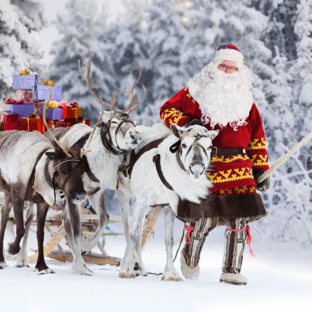 Geschichte Beginnt In Lappland: Die Rentiere Und Der über Nikolaus Rentiere