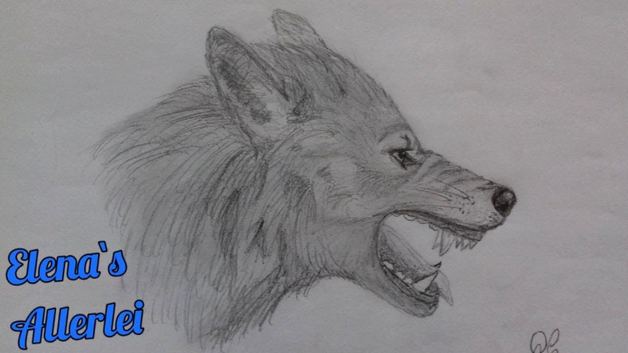 Gezeichneter Wolf #2, Fletschend, Seitenansicht, Beistift Auf Papier in Wölfe Zeichnen