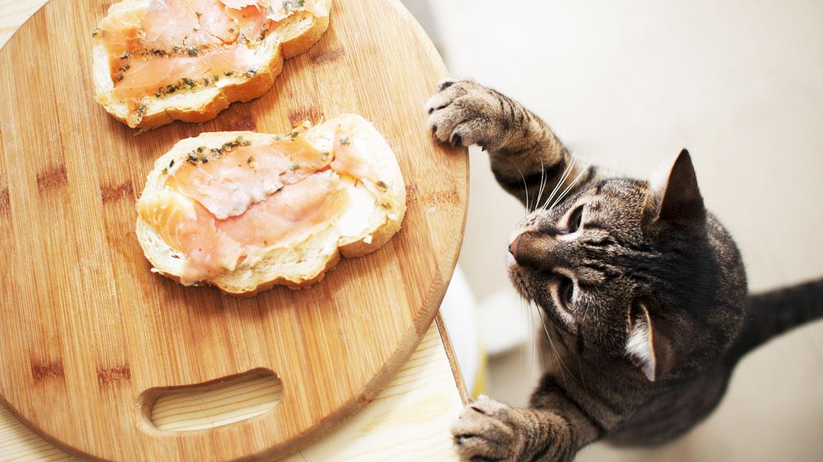 Giftig Für Katzen: Lebensmittel, Die Nicht In Den Fressnapf in Was Passiert Wenn Katzen Alkohol Trinken