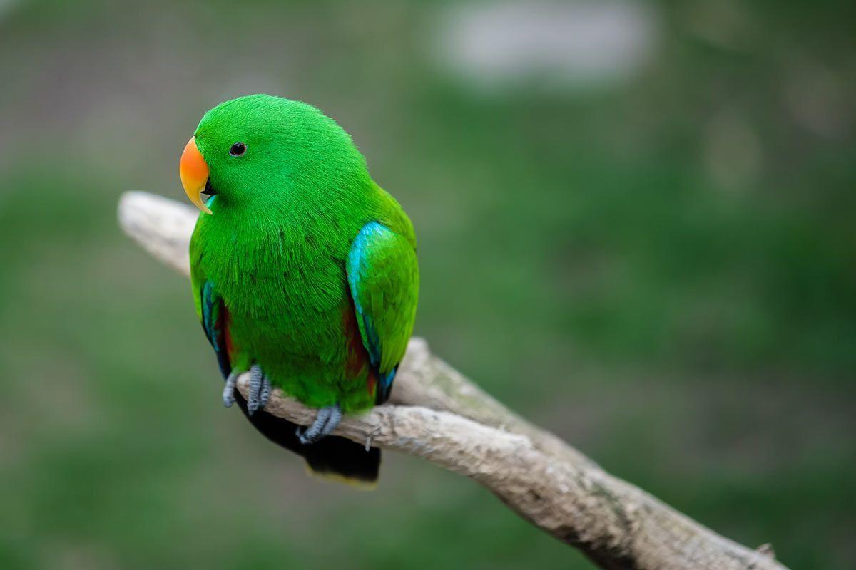 Grüne Tiere über Tier Mit C Am Anfang