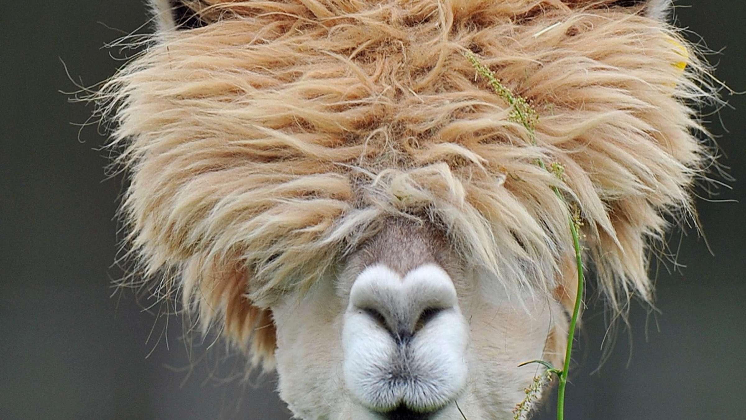 Haare: Was Sie Über Haare - Aufbau Und Wachstum Wissen für Wieviel Haare Hat Der Mensch Auf Dem Kopf