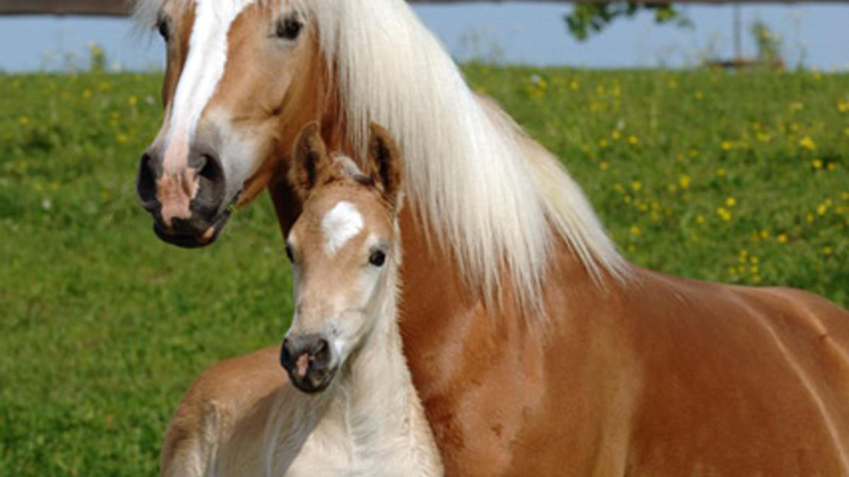 pferderassen von a bis z mit bildern  kinderbilder