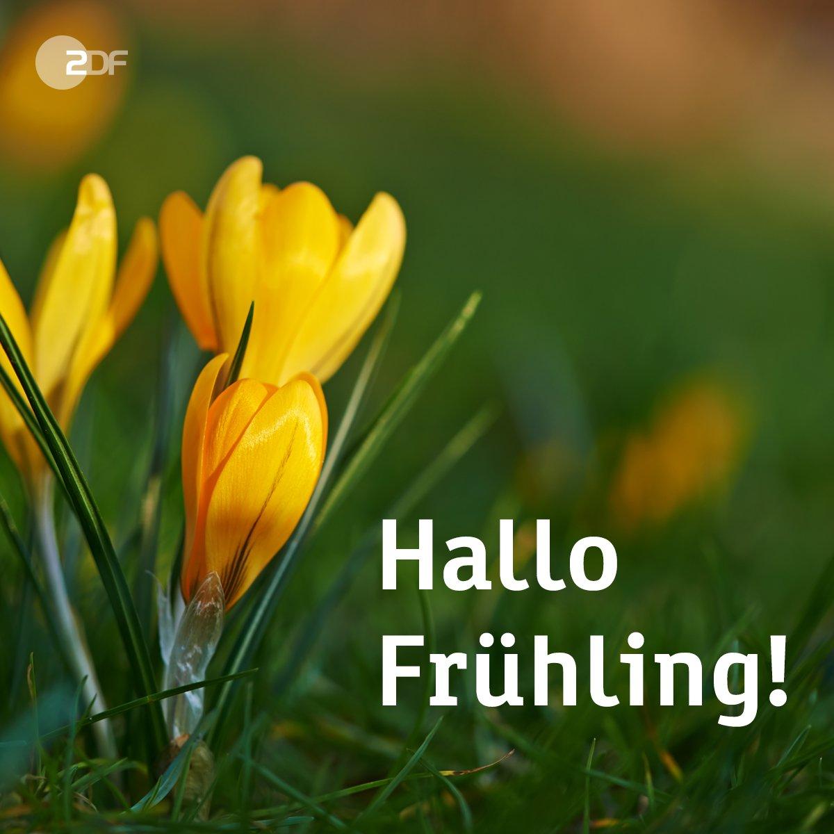 Hallo Frühling Bilder   Bilder Und Sprüche Für Whatsapp Und ganzes Lustige Frühlingsbilder Kostenlos