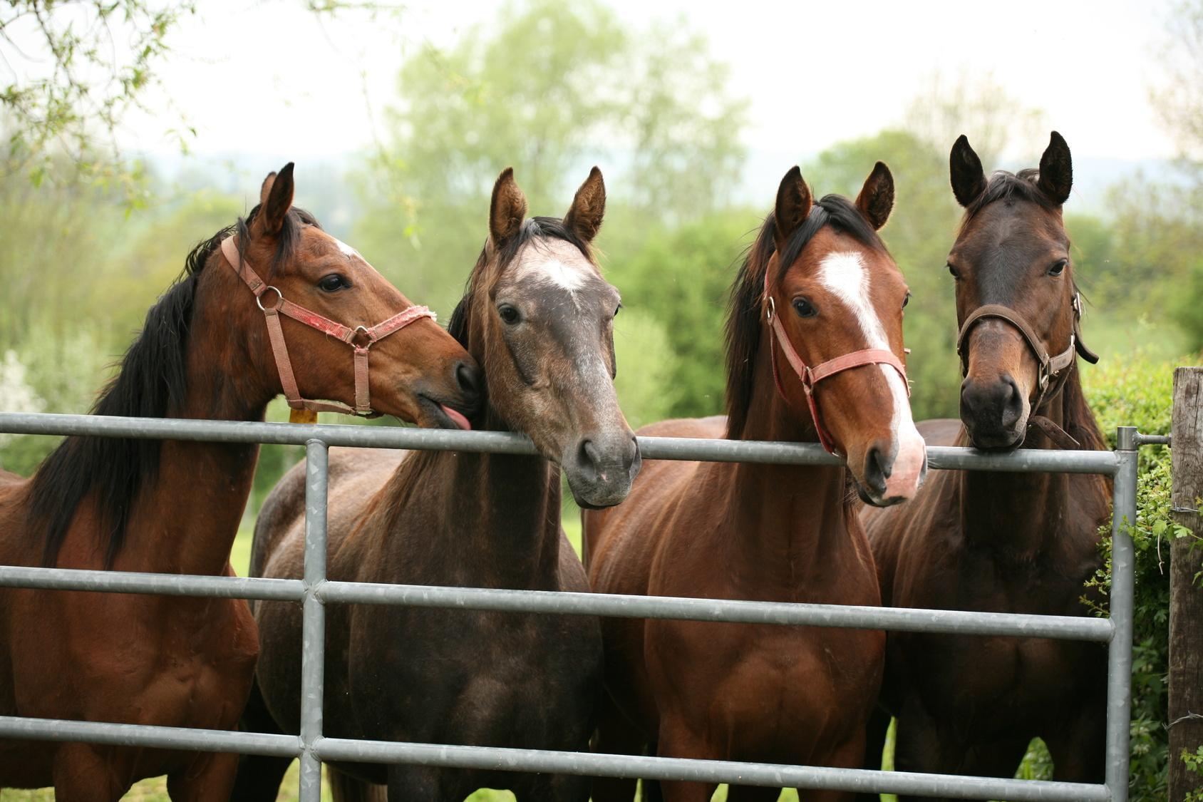 Haustierrassen Und Tierarten Von A-Z Im Überblick | Markt.de über Pferderassen Von A Bis Z Mit Bildern