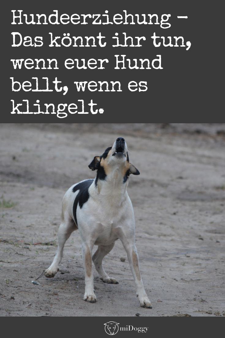 Hilfe! Mein Hund Bellt, Wenn Es Klingelt! (Mit Bildern verwandt mit Warum Bellt Mein Hund Wenn Es Klingelt