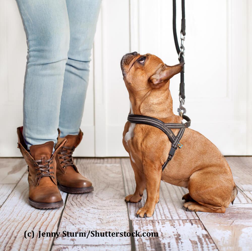 Hilfe! Mein Hund Zieht An Der Leine - Haustiermagazin in Hund Zieht Stark An Der Leine Was Tun
