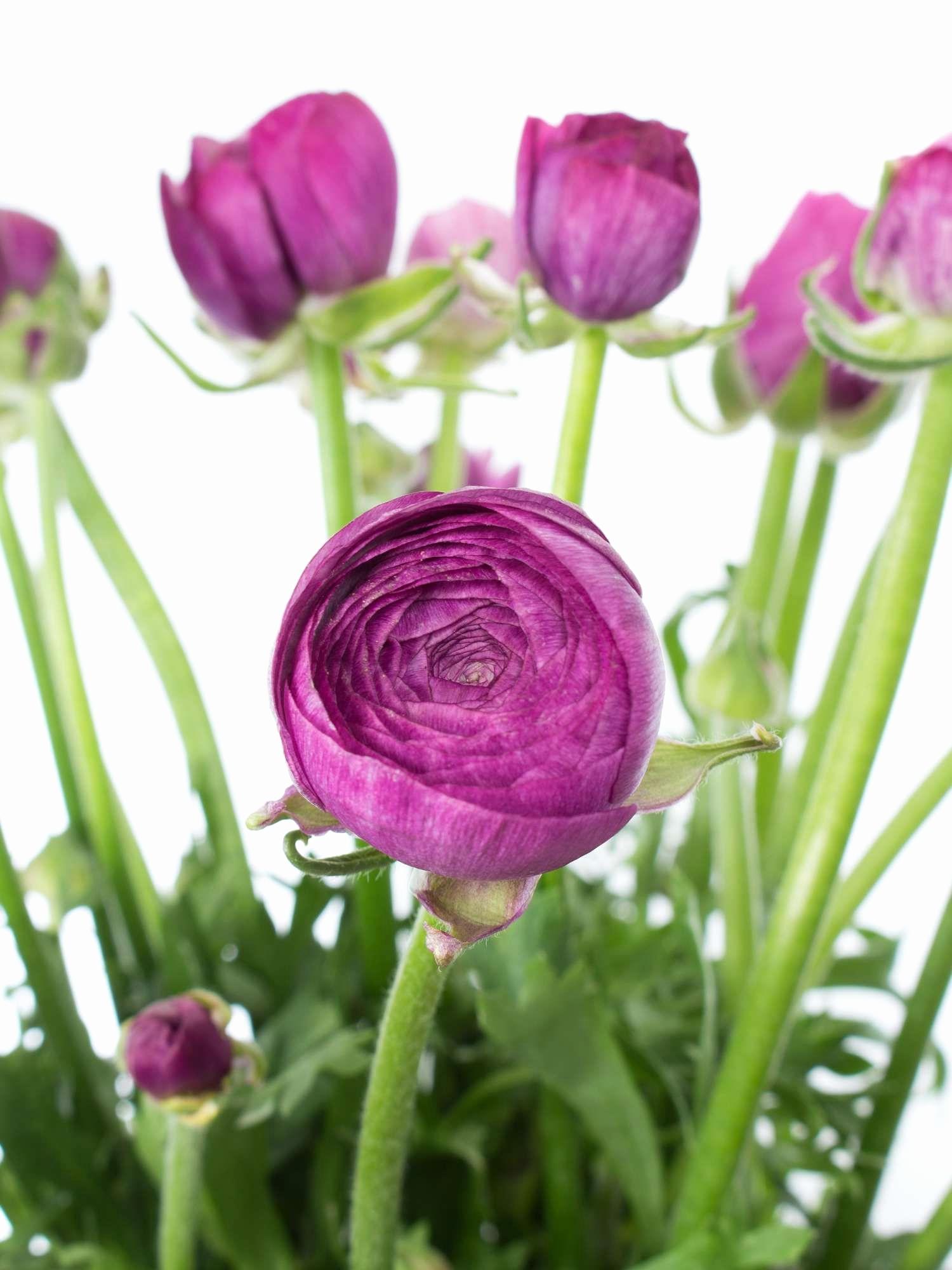 Hintergrundbilder Blumen Kostenlos Herunterladen Einzigartig verwandt mit Bilder Blumen Kostenlos