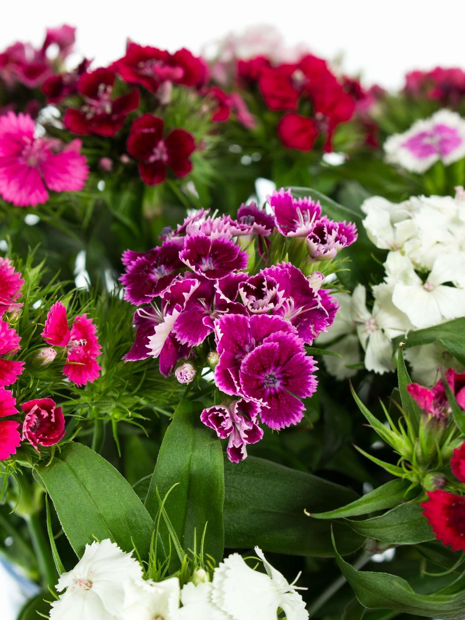 Hintergrundbilder Blumen Kostenlos Herunterladen Schön 35 innen Bilder Blumen Kostenlos