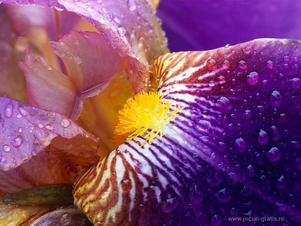 Hintergrundbilder Blumen Kostenlos verwandt mit Bilder Blumen Kostenlos
