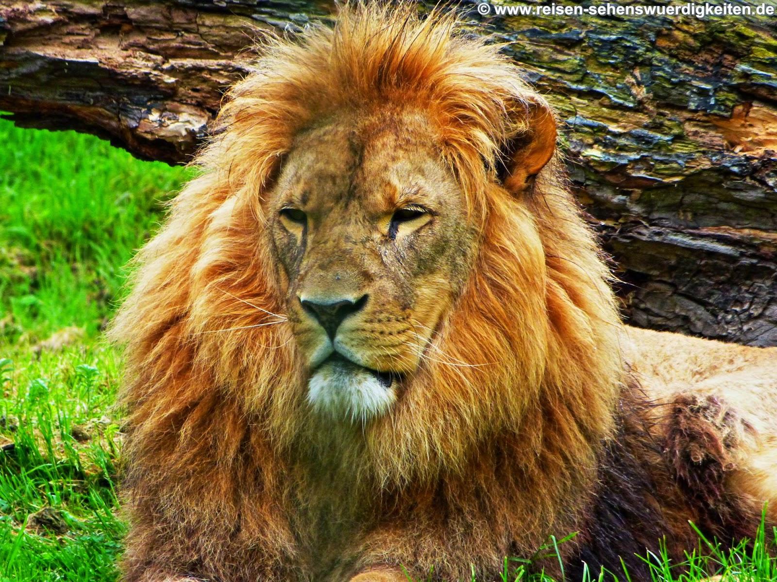 Hintergrundbilder Kostenlos Tiere innen Tierbilder Download