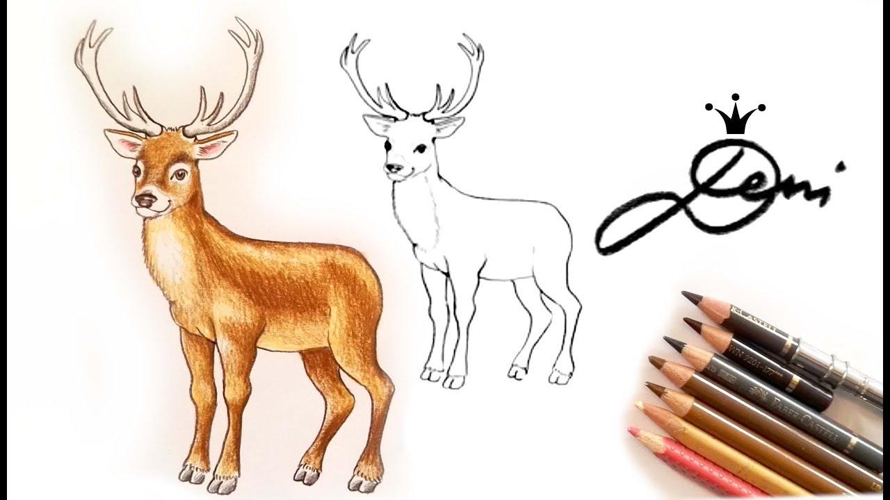 Hirsch Zeichnen Lernen 🦌 How To Draw A Deer 🦌 Как Се Рисува Елен 🦌  Animals Tiere Животни ganzes Reh Zeichnen