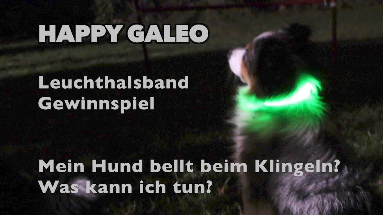 Hund Bellt Beim Klingeln - Was Kann Ich Tun? - Gewinnspiel Und Test Night  Howl Leuchthalsband bei Warum Bellt Mein Hund Wenn Es Klingelt