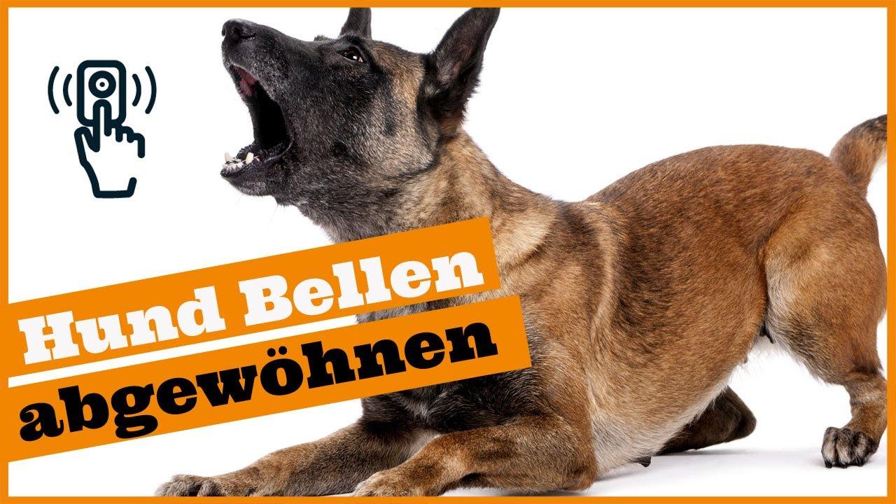 Hund Bellt Wenns Klingelt I So Entspannt Dein Hund Bei Besuch I Stressfrei  Besuch Empfangen innen Warum Bellt Mein Hund Wenn Es Klingelt