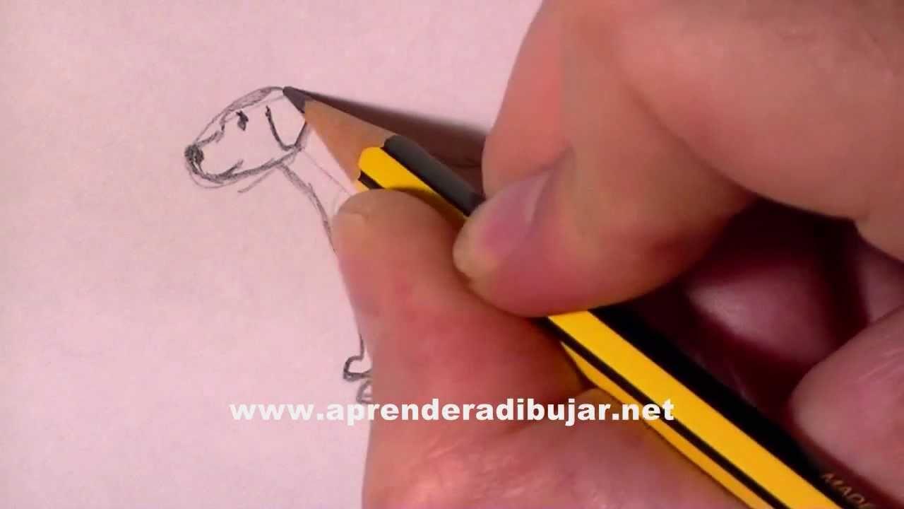 Hund Bleistift Zeichnung - Online Zeichnen Lernen bei Malen Lernen Videos