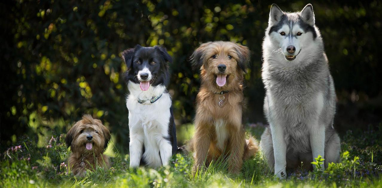 Hunderassen – Ein Streifzug Durch Die Geschichte ganzes Hunderasse 7 Buchstaben