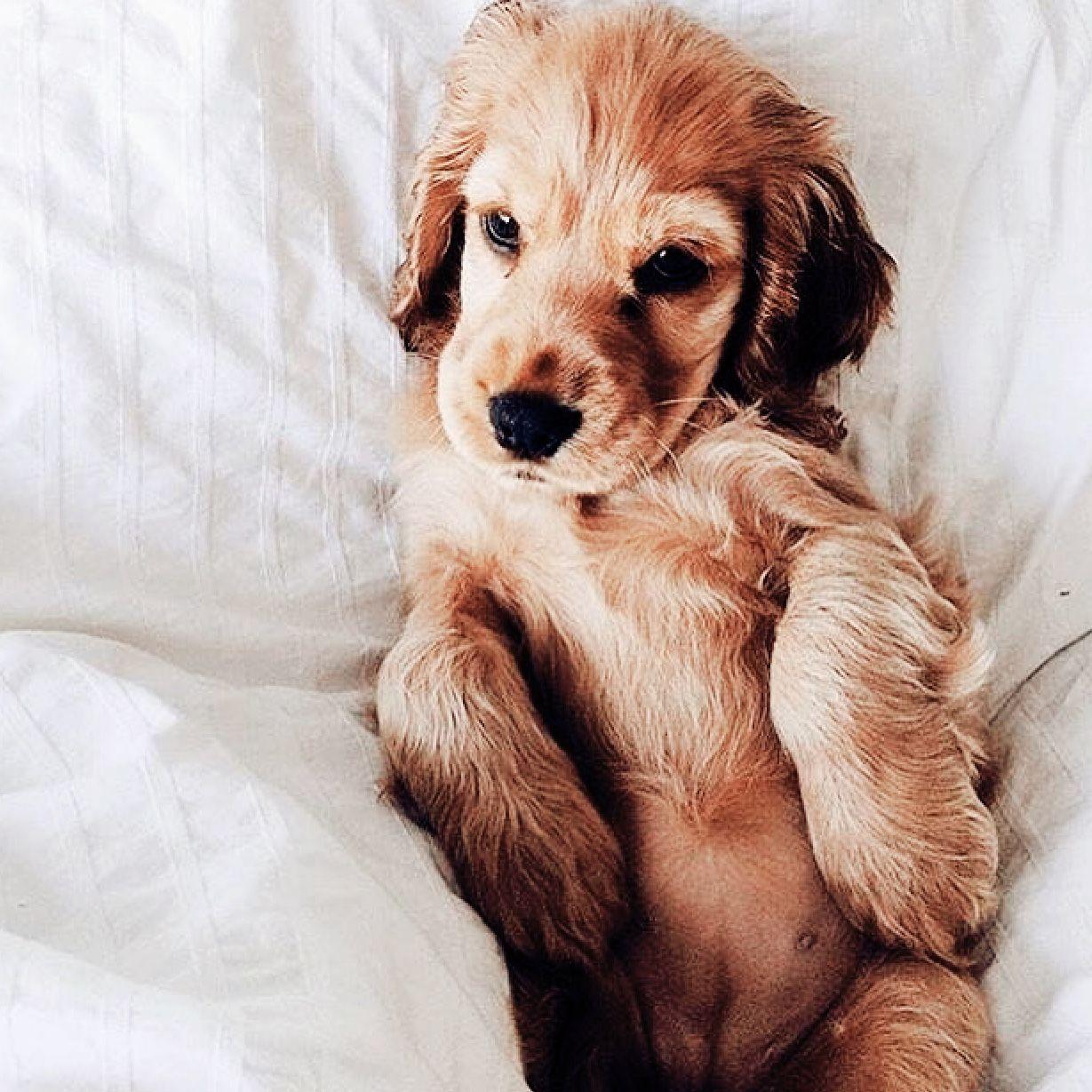 Hunderassen Mit Locken | Bilder Und Sprüche Für Whatsapp Und innen Hunderasse 7 Buchstaben