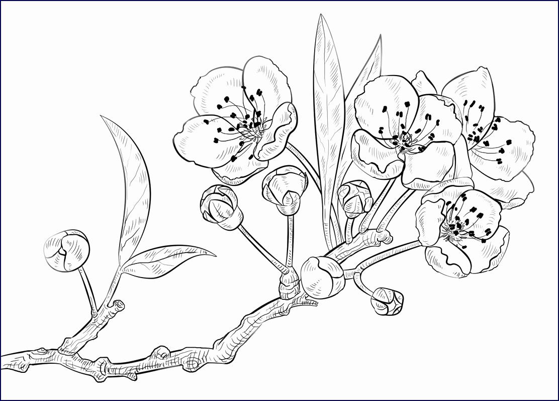 Indianer Bilder Zum Ausdrucken Neu Blumenbilder Zum verwandt mit Blumenbilder Zum Ausdrucken
