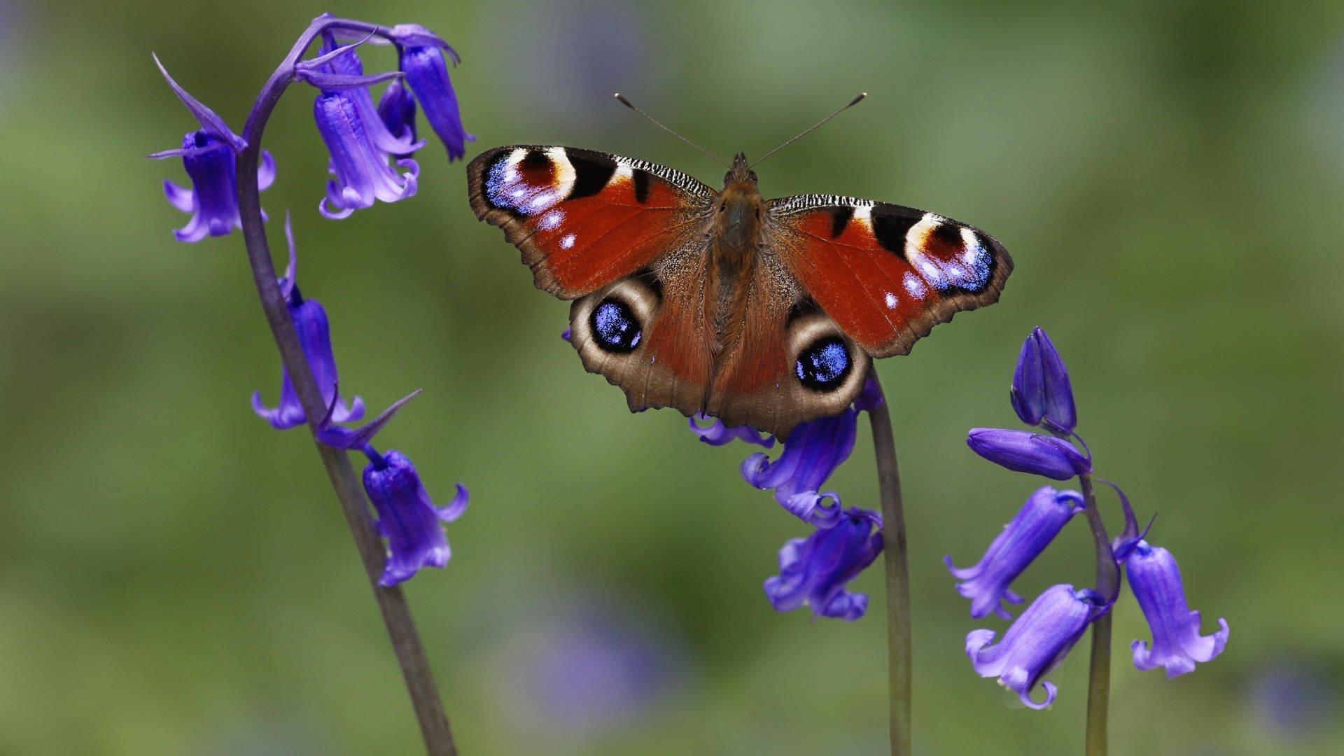 Insektensterben Zu Viel Dünger Schadet Schmetterlingen verwandt mit Schmetterlinge Insekten
