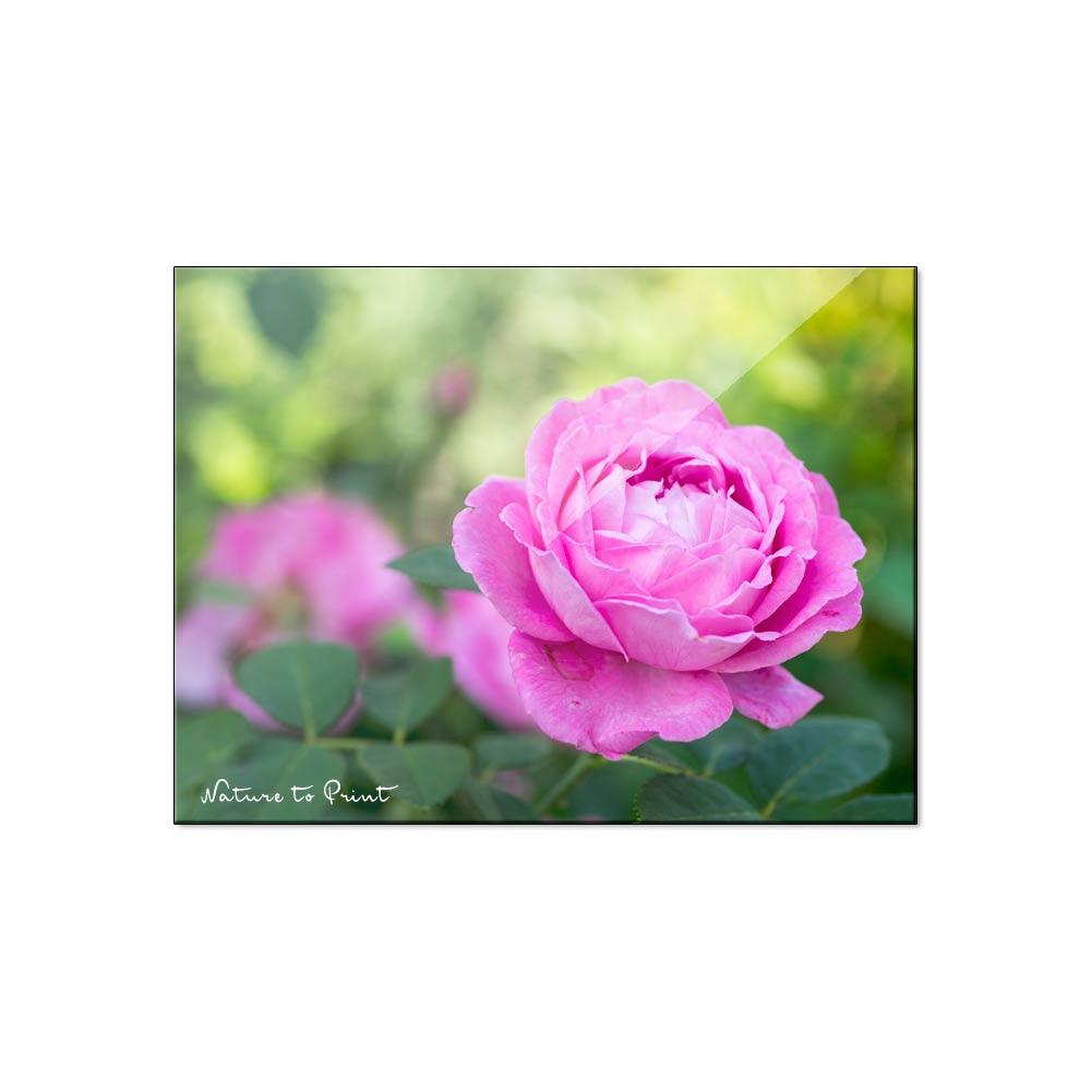 Ist Ihre Liebe Reif Für Ein Rosenbild?   Aus Liebe Zur Rose. für Blumenbilder Rosen