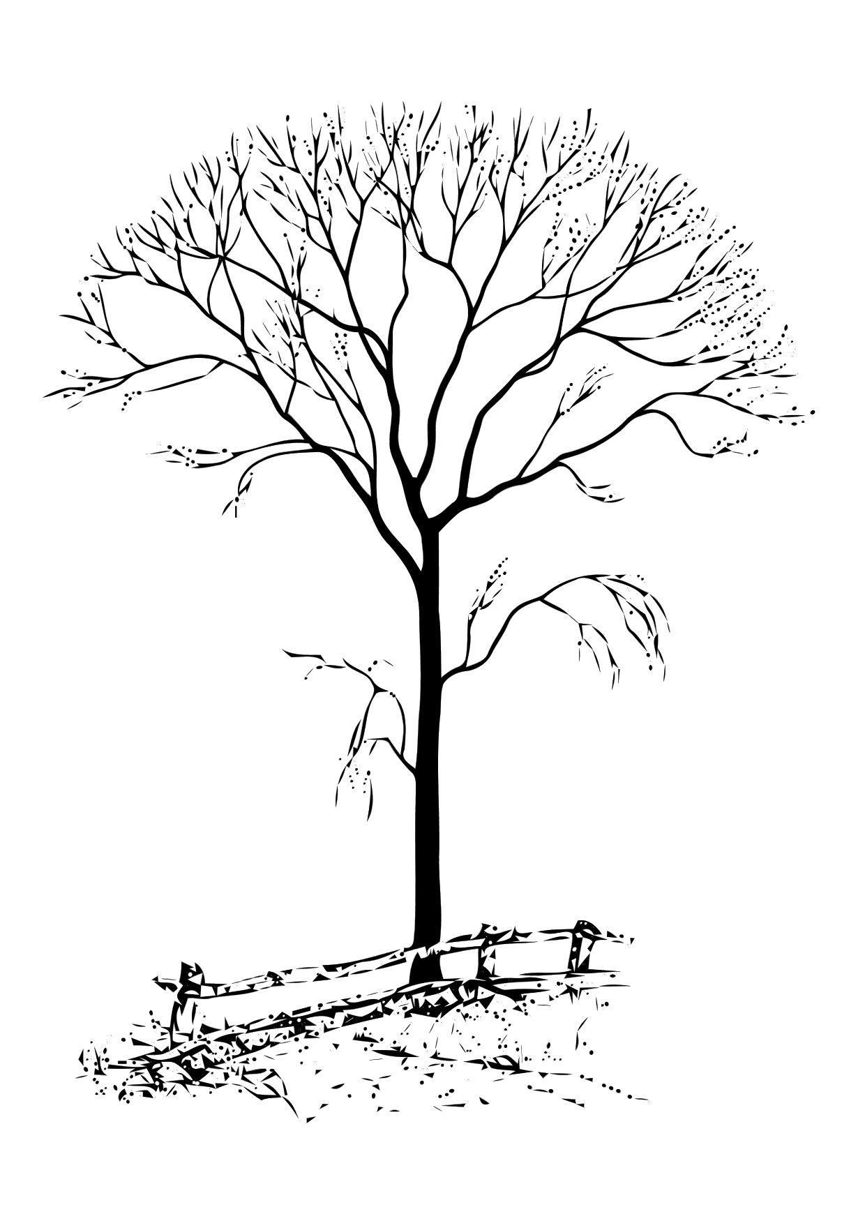 Kahler Baum Malvorlage | Coloring And Malvorlagan in Malvorlage Baum Mit Ästen