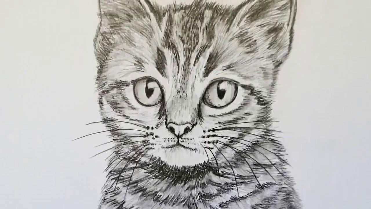 Katze Zeichnen Lernen Für Anfänger | Tiere Zeichnen bei Katze Zeichnen Lernen