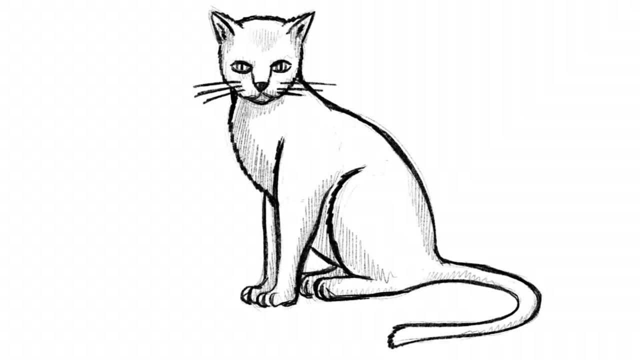 Katze Zeichnen Lernen - Übung Mit Einfachen Formen [Video] ganzes Katze Zeichnen Lernen