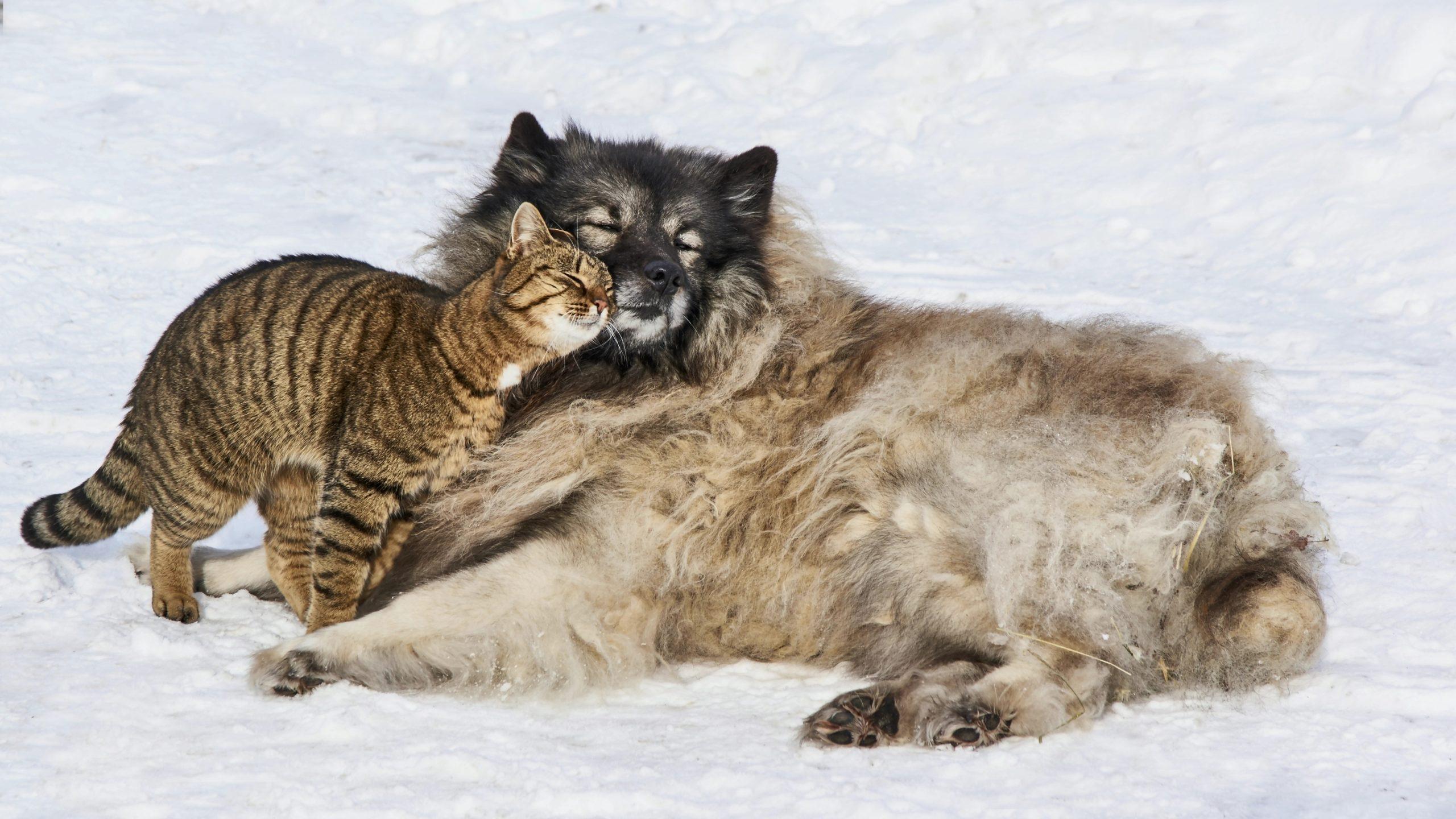 Katzenbilder Kostenlos Ausdrucken bestimmt für Katzenbilder Zum Ausdrucken