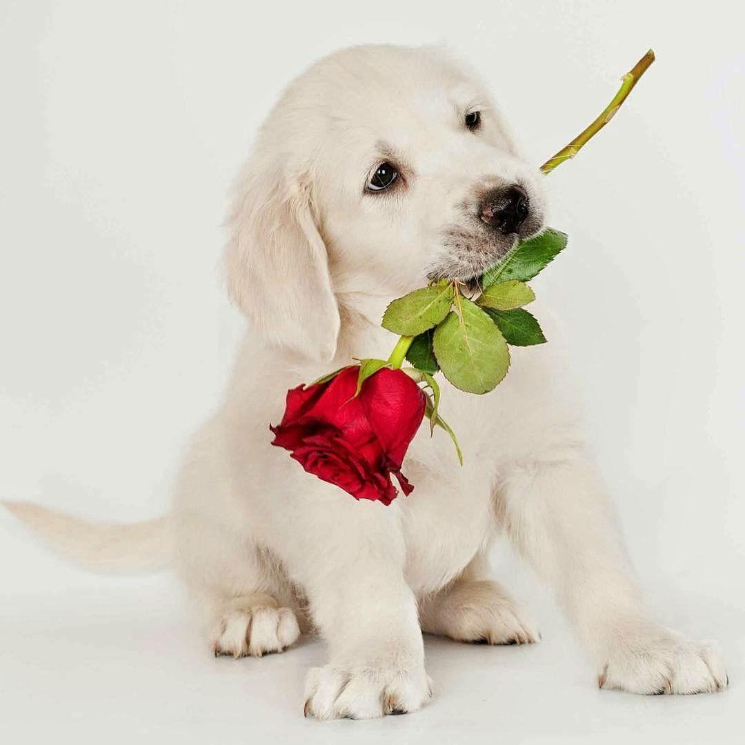 Kleintier Hunderassen   Bilder Und Sprüche Für Whatsapp Und für Hunderasse 7 Buchstaben