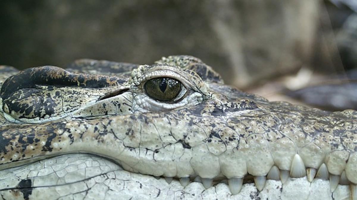 Können Tiere Weinen? Elefanten, Affen, Hunde & Co. Im Check über Warum Weinen Krokodile Beim Fressen