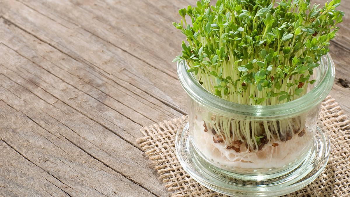 Kresse: So Pflanzen Sie Kresse Selbst An mit Wie Lange Braucht Kresse Zum Wachsen