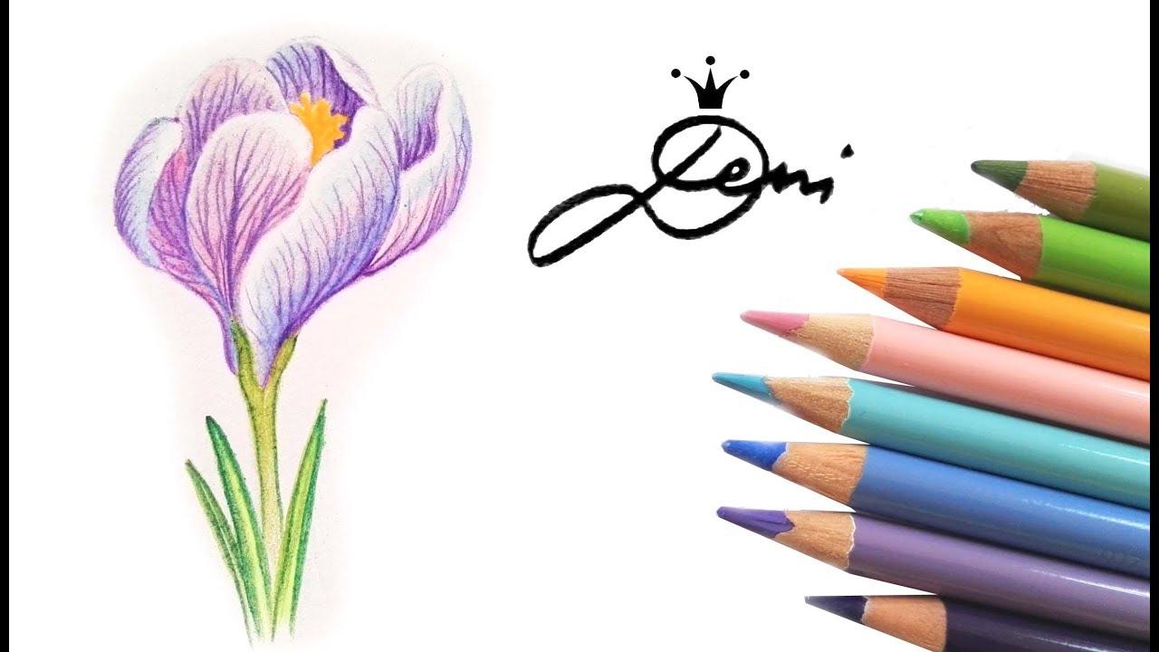 Krokus Zeichnen Lernen 🌸 Blume Malen 🌺 How To Draw A Crocus Flower 🌷 Kак  Се Рисува Цвете Mинзухар für Blumen Zeichnen Lernen